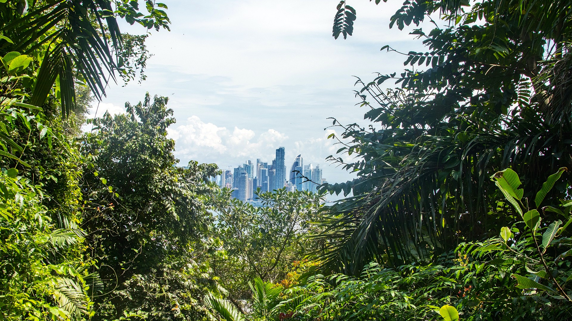 Bezienswaardigheden Panama-Stad, jungle