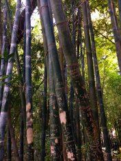 Marrakesh Jardin Majorelle bamboe