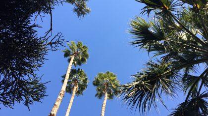 Marrakesh Jardin Majorelle palmbomen