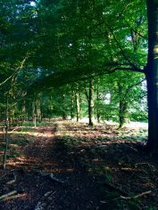 lost in a forest, even geen thuis