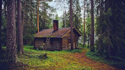 11x leukste Airbnb boshuisjes op de Veluwe