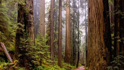 Redwood National Park, USA, Star Wars filmlocatie