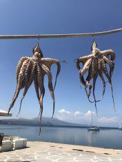 Koroni, octopus