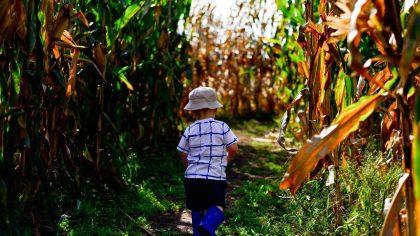 Maïsdoolhof Voorthuizen
