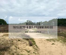 Wandelen: Tafelberg en Blaricummerheide