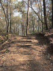 Dwingelderveld gele wandelroute witteveen bos trappetje