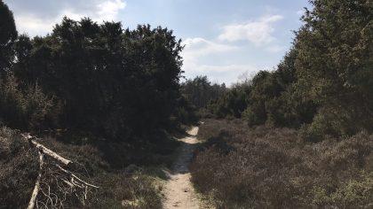 Dwingelderveld gele wandelroute witteveen heide
