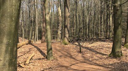 Dwingelderveld witte route boswandeling Spier
