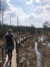 Dwingelderveld witte route boswandeling spier irene rug