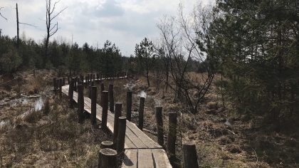 Wandelen in Nationaal Park Dwingelderveld plankenpad