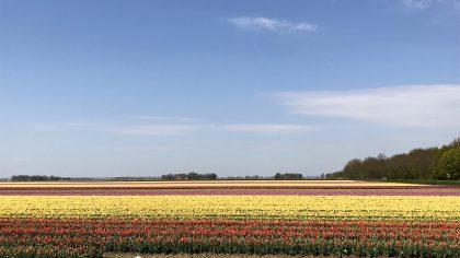 Tulpenroute tulpenfestival