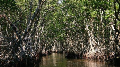Everglades national Park, Florida, amerika