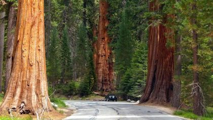 Sequoia and Kings Canyon National Park, Amerika